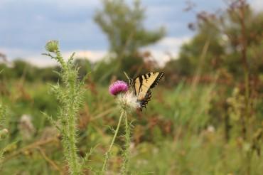 ButterflyFront