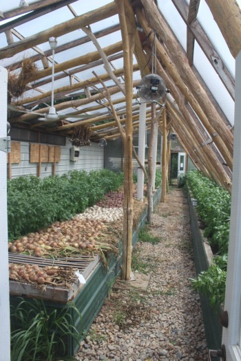 Greenhouse interior.