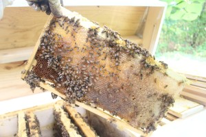 HoneyFrame