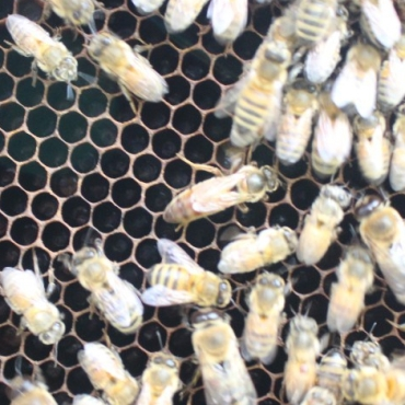 Queen right in the center.