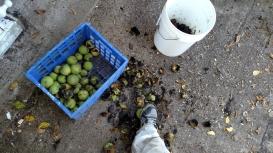 Walnuts.