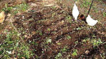 Planted garlic.