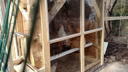 Chickens exploring the roost.