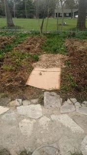 Cardboard under the mulch to supress weeds.