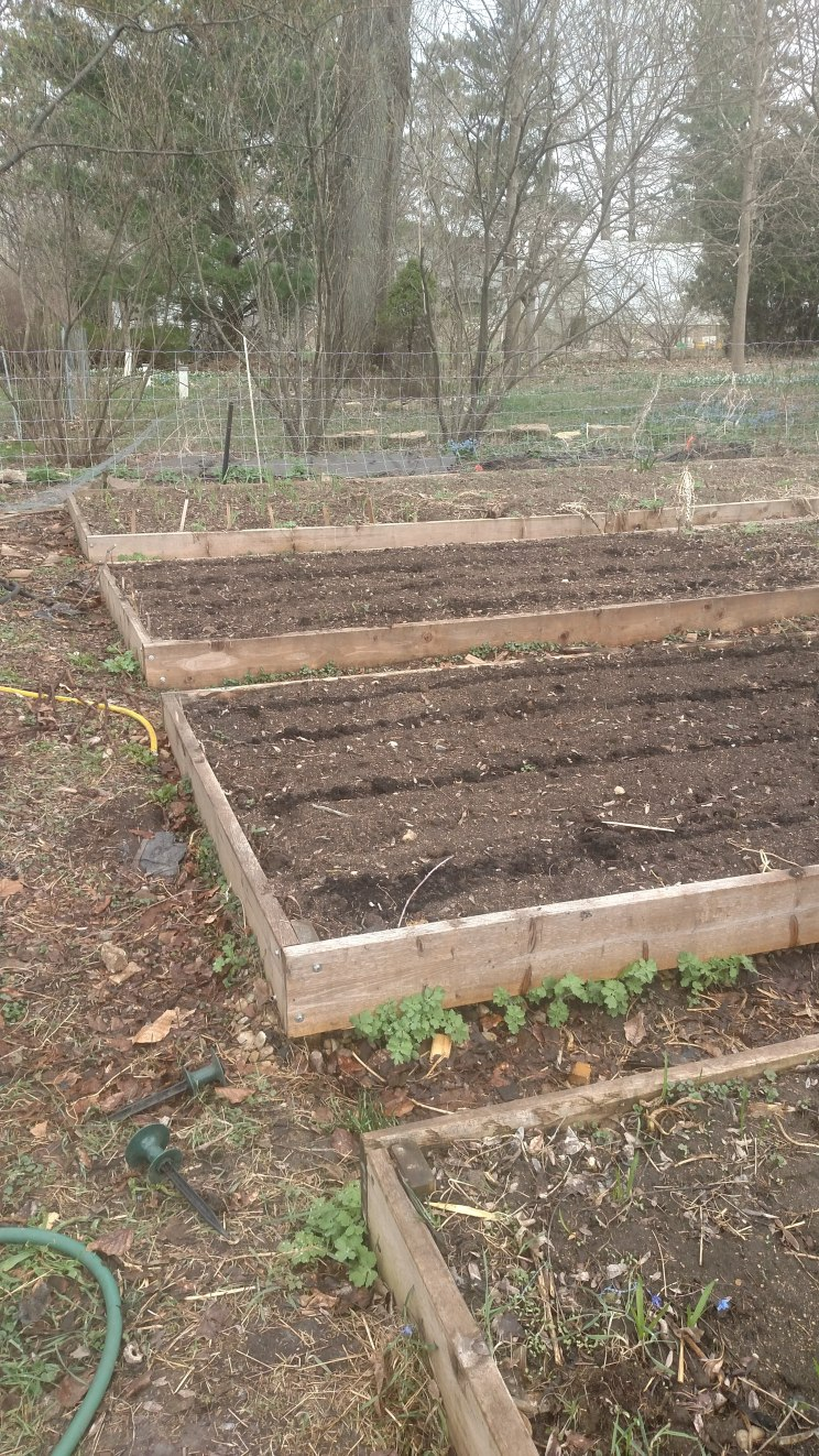 Raised beds with sandy soil for root crops.