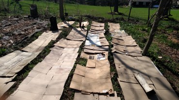 Cardboard sheet mulch to kill the weeds.