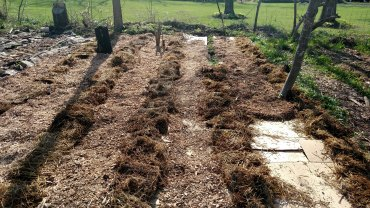 Wood mulch over the cardboard and straw mulch over the growing rows.