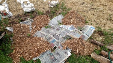 Newspaper mulch under woodchips.