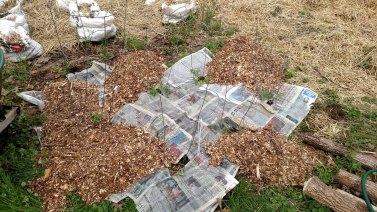 Newspaper mulch under woodchips.