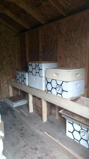 Three hives in the shed.