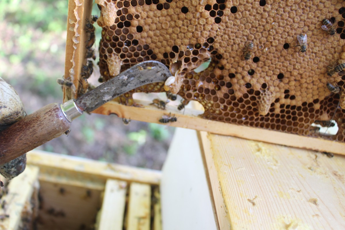 Bee Report — Splitting Hives and Raising Queens (Part II) by Low Technology Institute