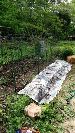 Cucumber trellises and newspaper sheet mulch.
