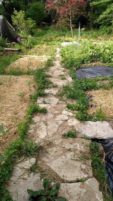 Weed-choked pathway.