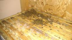 A few bees on the top of a shed hive; the rest are in the layer below.