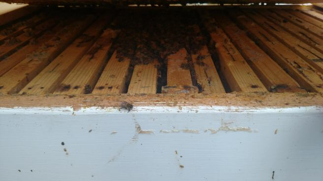 The second long Langstroth hive.