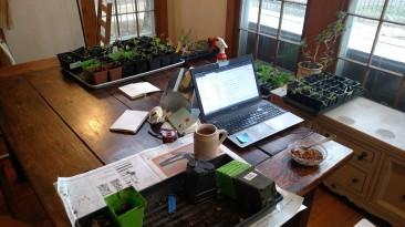Repotting seedlings.